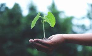 your wealth adapt grow